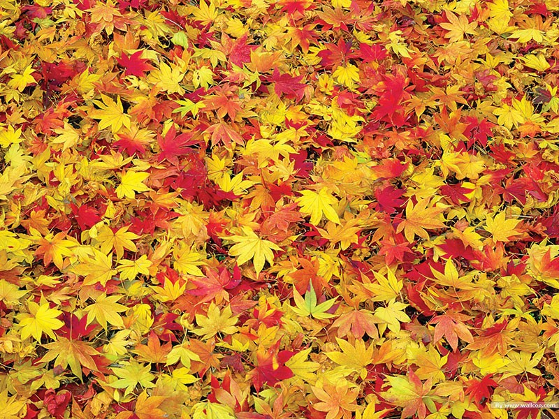 Contractors Now Face Fees for Leaf Dumping