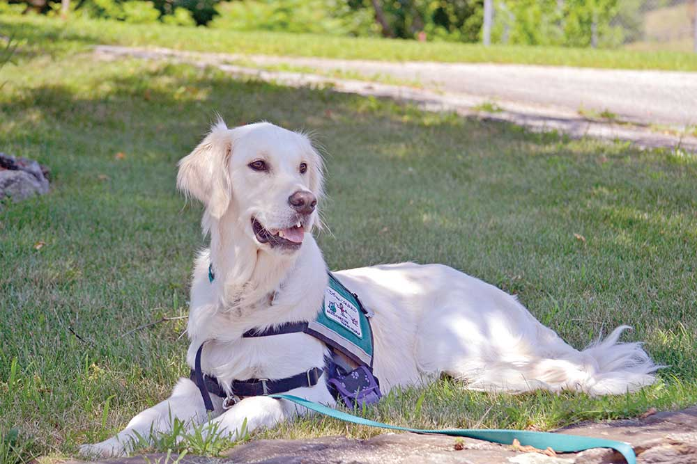 Bark Bytes… What are Support/Service Dogs?